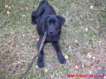 Výcvik psíka