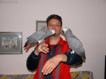 Africkej Grey papagáje dieta
